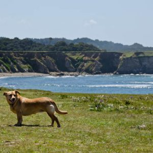 top 12 fun dog friendly things to do in mendocino
